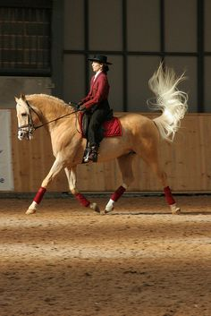 Palomino horse with a magnificient tail
