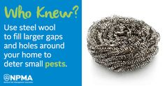 Did you know steel wool can be used to fill larger gaps and holes around your home to deter small pests? Get more quick tips on winter pest-proofing to keep pests like mice out of your home here.