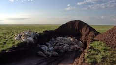 More Than Half of Entire Species of Saigas Gone in Mysterious Die-Off - The New York Times
