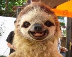 sloth with a selfie stick - Google Search