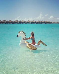 FUNBOY Pegasus in Bora Bora. Better than a unicorn?