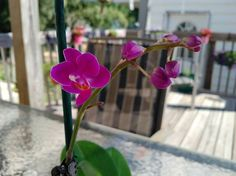 Woke up to first new orchid bloom