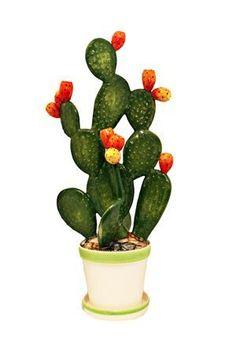 Grand cactus en céramique avec figues d - deco jardin deco amenagement jardin deco boheme jardin deco recup jardin decoracion jardin decoracion piedras jardin decoracion reciclaje Cactus Ceramic, Ceramic Flowers, Painted Rock Cactus, Painted Rocks, Cactus Decor, Cactus Plants, Indoor Cactus, Cactus Art, Grand Cactus