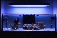 Minimalist Aquascaping
