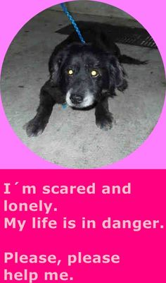BOBBY (A1704139) I am a male black and white Terrier mix. The shelter staff think I am about 8 years old. I was found as a stray and I may be available for adoption on 06/15/2015. — hier: Miami Dade County Animal Services. https://www.facebook.com/urgentdogsofmiami/photos/pb.191859757515102.-2207520000.1434302684./990043787696691/?type=3&theater