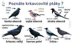 Bird, Nature, Animals, Naturaleza, Animales, Animaux, Birds, Animal, Animais