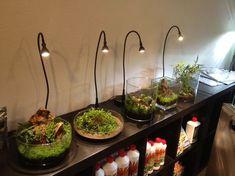 Wabi Kusa, een aquarium zonder water: tips van een expert Water Terrarium, Moss Terrarium, Terrarium Plants, Indoor Water Garden, Glass Garden, Indoor Plants, Aquascaping, Paludarium, Vivarium