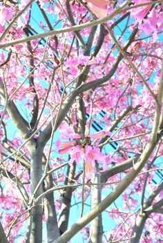 Celebrating The Lunar New Year in LA (via Bloglovin.com )