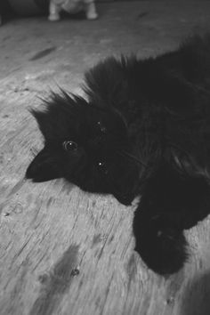 Percy by Natasha Wiseman on Cats, Creative, Photography, Animals, Gatos, Photograph, Kitty Cats, Animaux, Photography Business