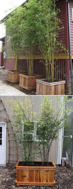#6. These tall and lush bamboo screens are perfect to create privacy in your yard.
