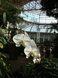 Gaylord Opryland Hotel - the atrium - totally will stay here one day