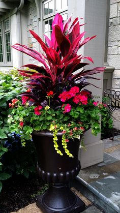 63 simple container garden flowers ideas 5 is part of Container gardening flowers - 63 simple container garden flowers ideas 5 Outdoor Flowers, Outdoor Plants, Outdoor Flower Planters, Planters For Front Porch, Full Sun Planters, Tall Planters, Front Porches, Outdoor Spaces, Unusual Flowers
