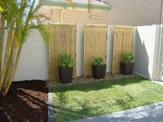 Image result for bamboo plants against fence