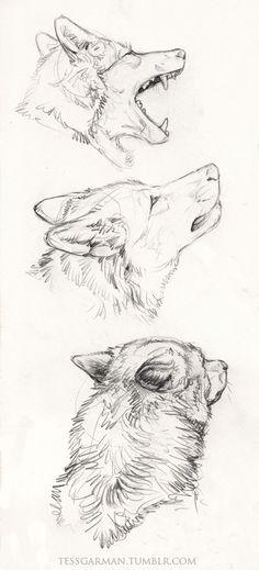 Wolf skizze
