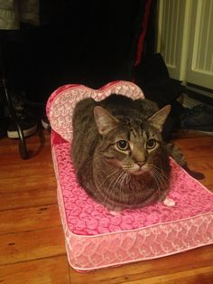 Valentine Kitty  (Barbie might miss the king-sized bed swiped from her dream house...)