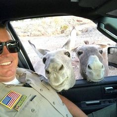 Karen Bell Lehr ~ Posted by the San Bernadino Sheriff Department.hanging out with the locals. Farm Animals, Animals And Pets, Community Policing, Mini Donkey, San Bernardino County, Cute Funny Animals, Beautiful Horses, Hanging Out, Pony