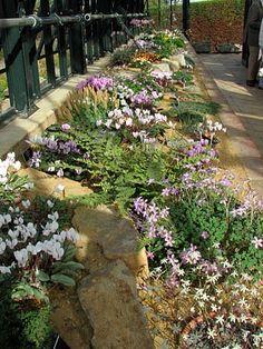 24 September 2009 - Wisley's Alpine Diary - Gardeners' Diaries - Alpine Garden Society