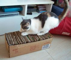 DIY cat scratch box - recycled cardboard cut to fit into cardboard box that could be covered to look nicer