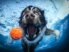 Check out the whole gallery of underwater dog photos. http://www.cbsnews.com/2300-504784_162-10011624-7.html?tag=page;next So creative and adorable!