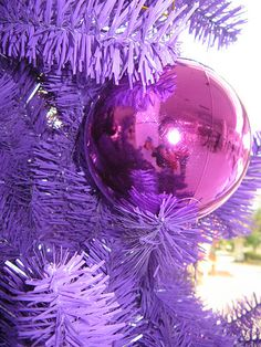 Purple Christmas!