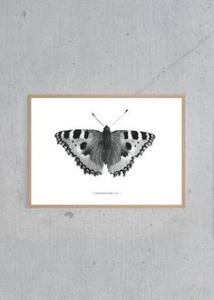 Lepidoptera - 02