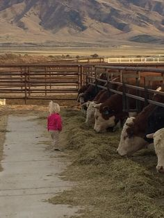 Little Farm Girl & Cows