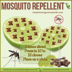 ☛ A GREAT mosquito repellent to help you enjoy the outdoors this summer.  FOR ALL THE DETAILS: http://www.stepintomygreenworld.com/helathyliving/around-the-home/lime-and-cloves-mosquito-repellent/  ✒ Share | Like | Re-pin | Comment