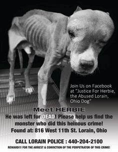 We need this poster to be shared with EVERYONE across the United States and BEYOND. We have to find the person(s) responsible for Herbie's condition. Please forward to your friends, post at work if you can... do what you can to get the word out. It costs you nothing but it is PRICELESS!