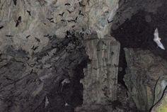 The Guatemala Bat Cave