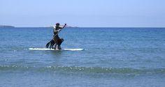 Chris & Finn standup paddling in the Baja...