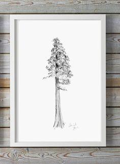 Sequoia boom tekening  giclee print  boom kunst   Boom door ZenInks