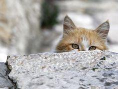 Greek cat.