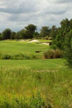 Camp Creek Golf Club, Panama City Beach: See 36 reviews, articles, and 5 photos of Camp Creek Golf Club, ranked No.35 on TripAdvisor among 102 attractions in Panama City Beach.