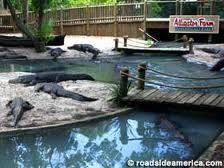 st. augustine alligator farm in florida