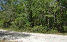Photo 14 : TBD RIVERSIDE DRIVE, OBrien, FL 32071, US