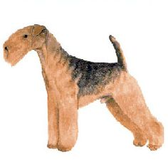how-to-groom-a-lakeland-terrier
