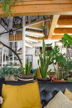 Pflegeleichte Zimmerpflanzen für deinen Urban Jungle [unbezahlte werbung] Kein grüner Daumen? Du weißt nicht, welche Pfanzen wirklich pflegeleicht sind und schnell wachsen? Welche Grünpflanze mag es hell? Wie oft soll man gießen? Welche filtern sogar Schadstoffe aus der Luft? Meine Top 5 pflegeleichter Zimmerpflanzen mit vielen Tipps Bohemian Living, Boho, Modern Home Furniture, Moving House, Lifestyle Blog, Mid-century Modern, Lights, Interior Design, Home Decor