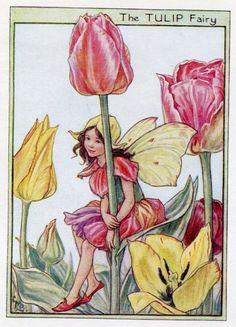 Tulipano fiore fata Vintage Print c.1950 di FlowerFairyPrints