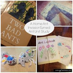 A Home Ant Invasion Turned Unit Study from Serving from home.  Cute idea!