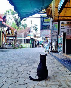 タイ ピピ・ドン島トンサイ村
