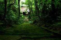妙法寺は苔寺として有名です。 フォトジェニックなお寺なのでカ...