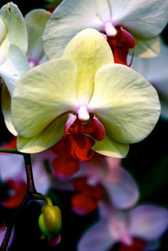 Orchid Show @NY Botanical Garden. Photography by #Koonartdesign