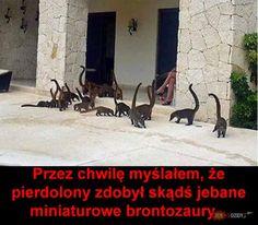 Brontozaury,