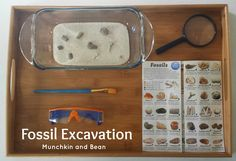 Munchkin and Bean: Fossil Excavation