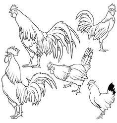 Rooster set on VectorStock