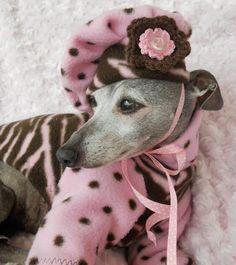 Greyhound Kills Small Dog