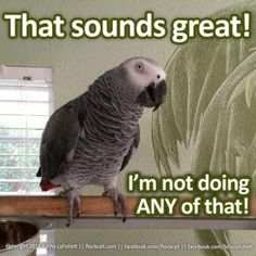 Bird memes galore! We've chosen the best bird memes and compiled them all in one spot. We hope you enjoy the humor and cleverness of these selections.: Felix Takes A Stand
