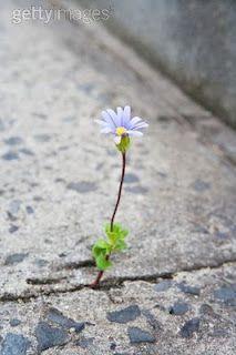 É tudo vazio. Plena, repleta, vestido de tecido barato, estampado. Flor. Ela se enche. Gasturas de vida. Pedais que passeiam a procura de algo que nunca vai encontrar. Desejos, intensos, mórbidos, desbaratados. Queria sair. Matando, sem motivo. Por não ter. Isso tudo não é fútil. http://flutu-ando.blogspot.com.br/2010/07/sempre-so-flor-realmente.html