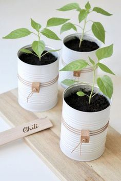 DIY potteskjuler: upcycling af brugte dåser til fine potter, chiliplanter - DIY potting plants recycling your used cans, chili plants. #diy #diyforhome #homediy