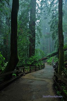 Redwoods - John Muir Woods -  A Rain Forest by Darvin Atkeson, via Flickr